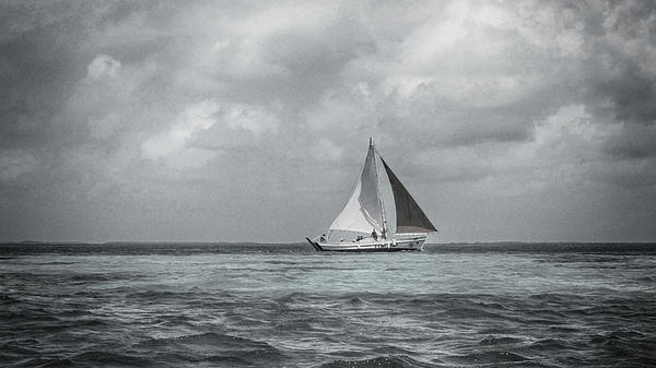 Black And White Sail Boat Print by Kristina Deane