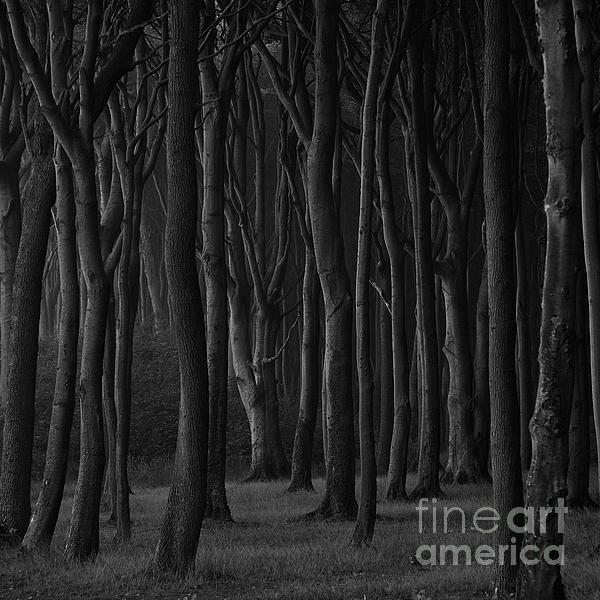 Black Forest Print by Heiko Koehrer-Wagner