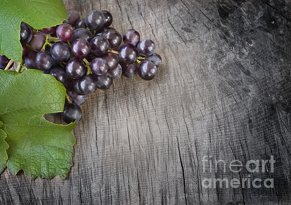 Black Grapes Print by Mythja  Photography