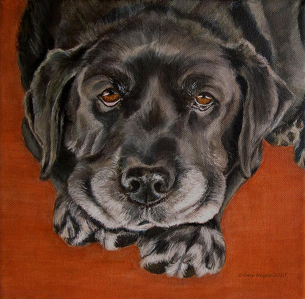 Black Labrador Rests Head Rescue Dog Print by Amy Reges