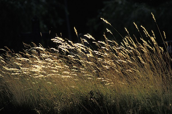 Blades Of Grass In The Sunlight Print by Jim Holmes