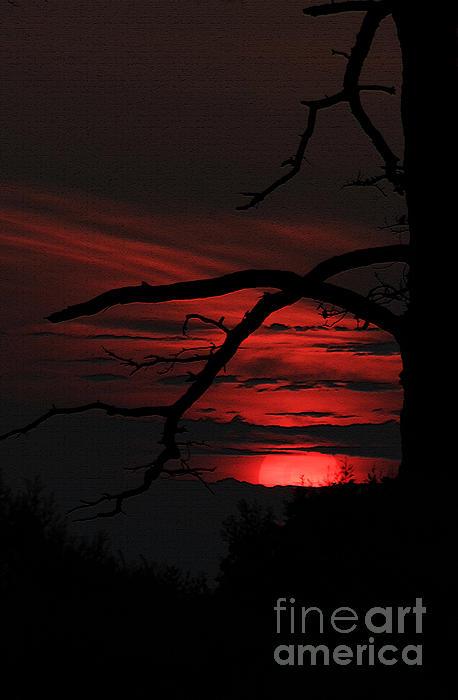 Olahs Photography - Blend of Zen Red