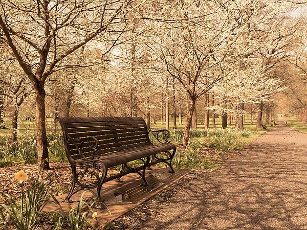 Blossoms  Print by Scott Rackers
