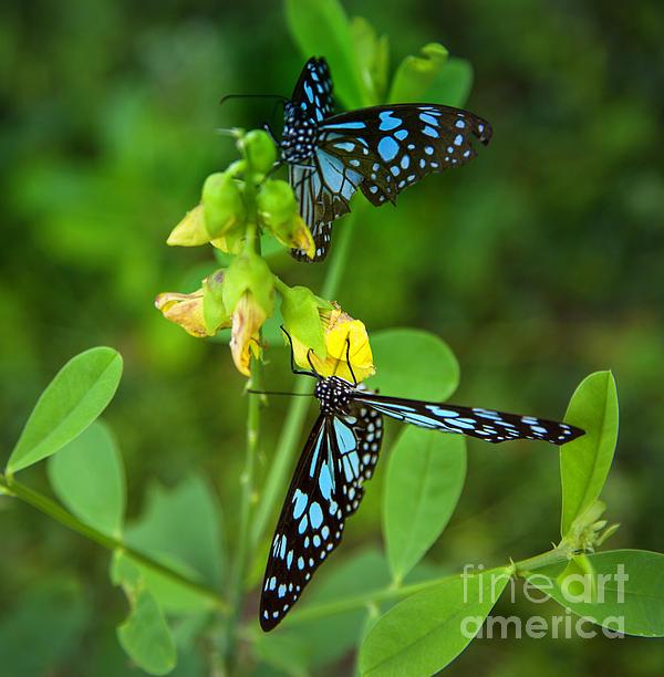 Blue Butterflies In The Green Garden Print by Regina Koch
