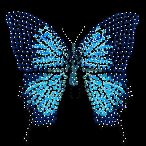 Blue Butterfly Black Background Print by R  Allen Swezey