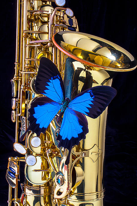 Blue Butterfly On Sax Print by Garry Gay