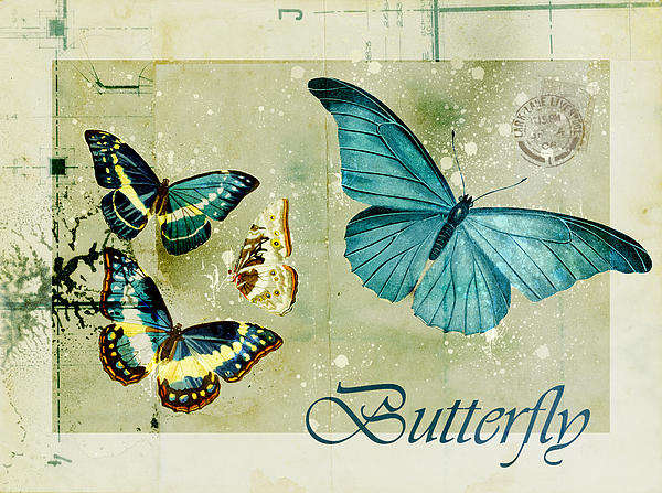Blue Butterfly - S55c01 Print by Variance Collections