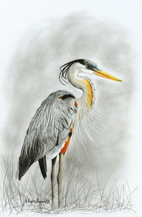 Phyllis Howard - Blue Heron 3