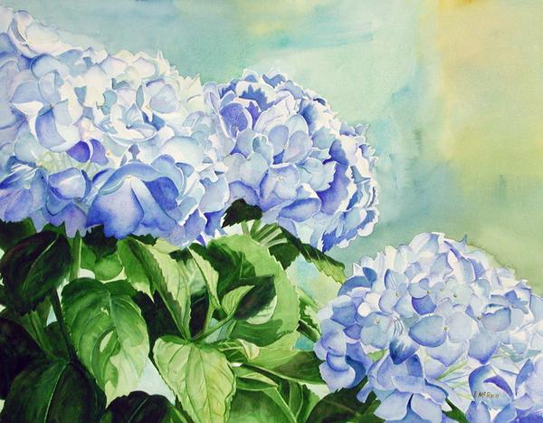 Blue Hydrangeas Print by Elizabeth  McRorie