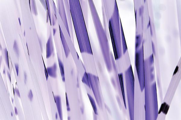 Blue Iris Print by Eiwy Ahlund