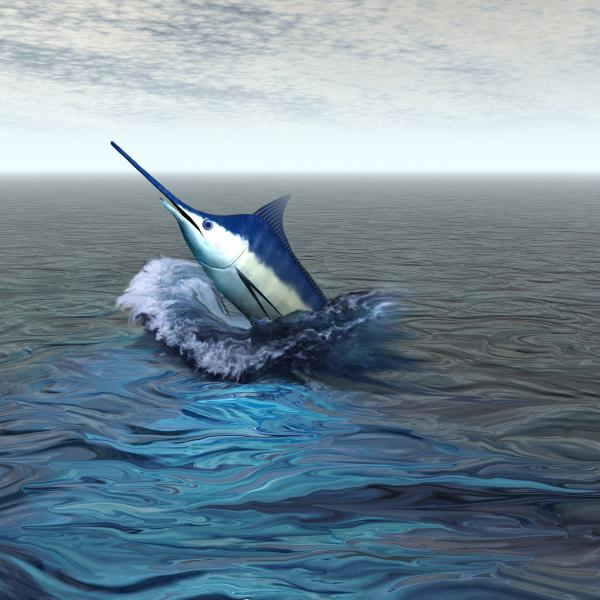 Blue Marlin Print by Corey Ford