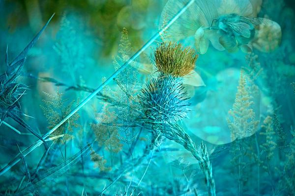 Blue Montage Print by Bonnie Bruno