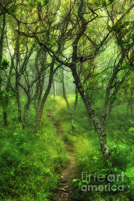 Dan Carmichael - Blue Ridge - Hiking Trail Through Trees in Fog I