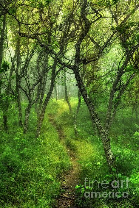 Dan Carmichael - Blue Ridge - Hiking Trail Through Trees in Fog I