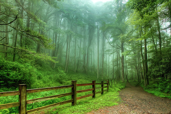 Dan Carmichael - Blue Ridge Parkway - Foggy Country Road and Trees II