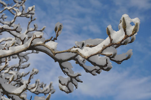 Blue Skies In Winter Print by Bill Cannon