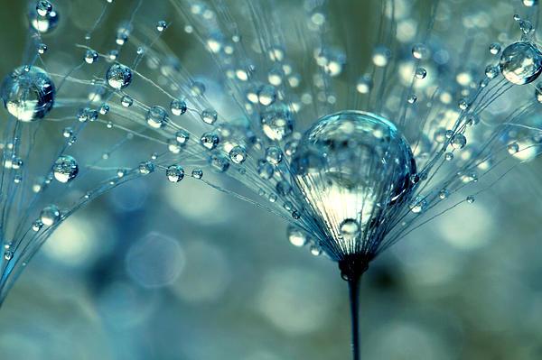Blue Sparkles Print by Sharon Johnstone