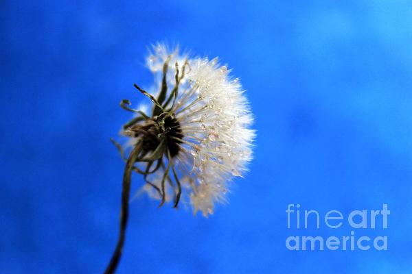 Blue Wish Print by Krissy Katsimbras