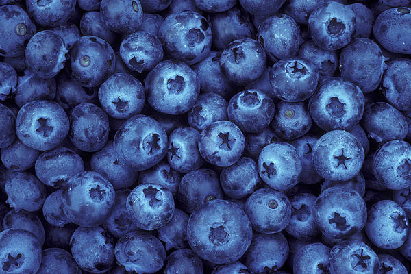 Blueberry Harvest Print by Greg Vaughn