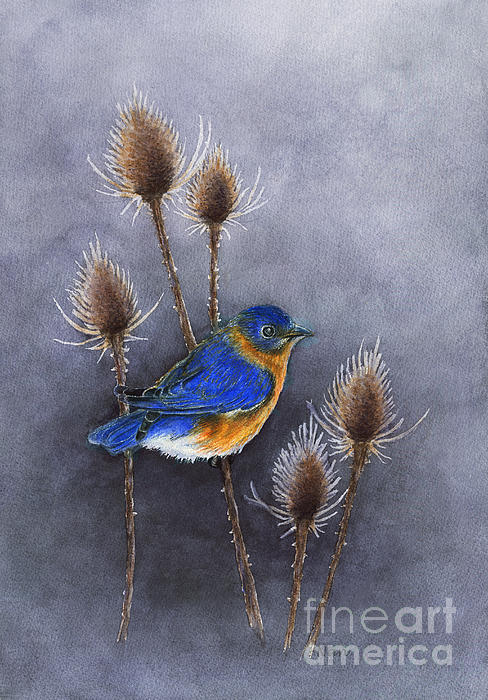 Nan Wright - Bluebird among the Thistles