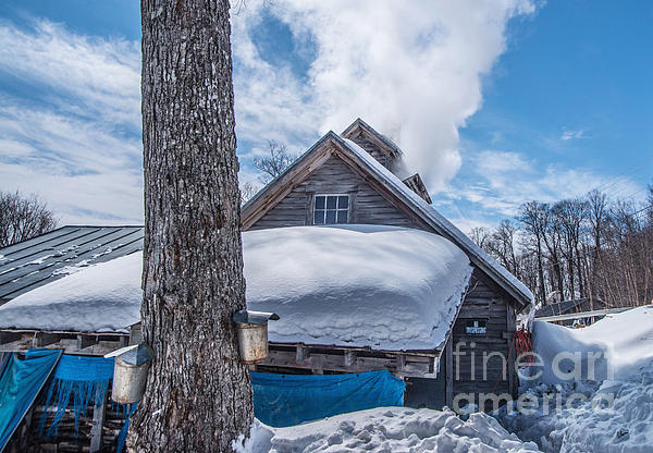 Boiling The Sap Print by Alana Ranney
