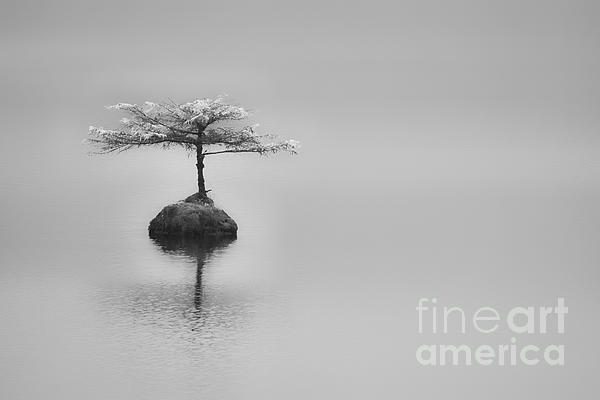 Bonsai At Fairy Lake Print by Carrie Cole