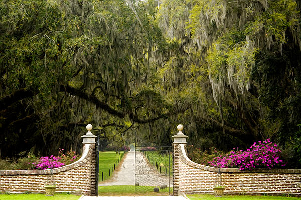 Boone Hall Plantation Print by Eggers   Photography