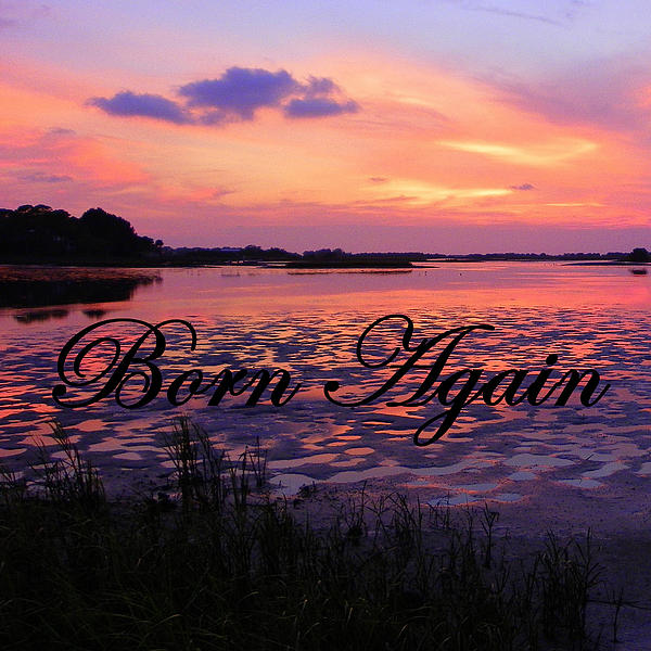 Born Again  Print by Sheri McLeroy