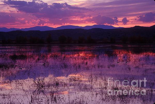 Bosque Sunset - Purple Print by Steven Ralser