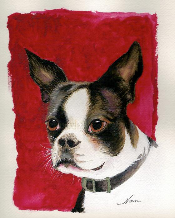 Nan Wright - Boston Terrier Dog