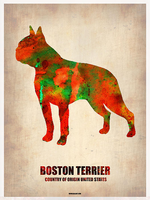 Boston Terrier Poster Print by Naxart Studio