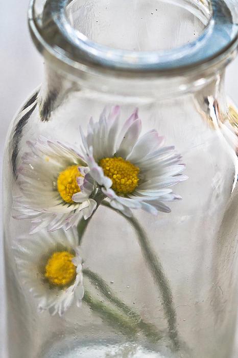 Bottled Delight Print by Constance Fein Harding