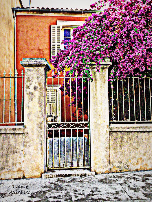 Lainie Wrightson - Bougainvillea on the Fence