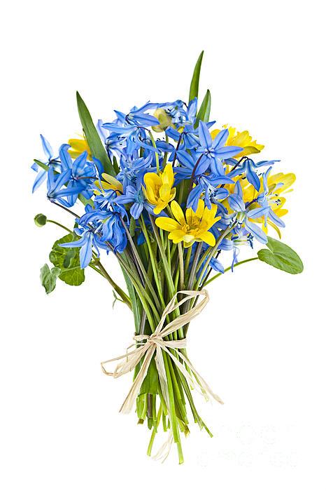 Bouquet Of Fresh Spring Flowers Print by Elena Elisseeva