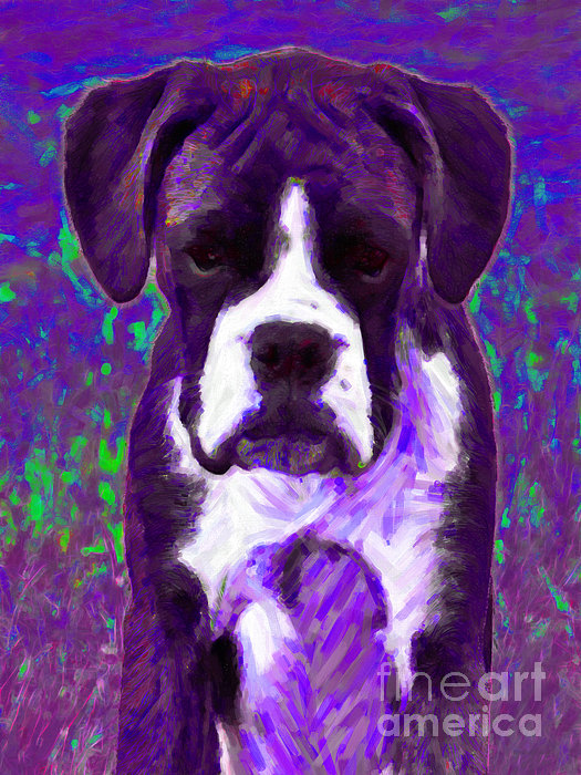 Boxer 20130126v6 Print by Wingsdomain Art and Photography