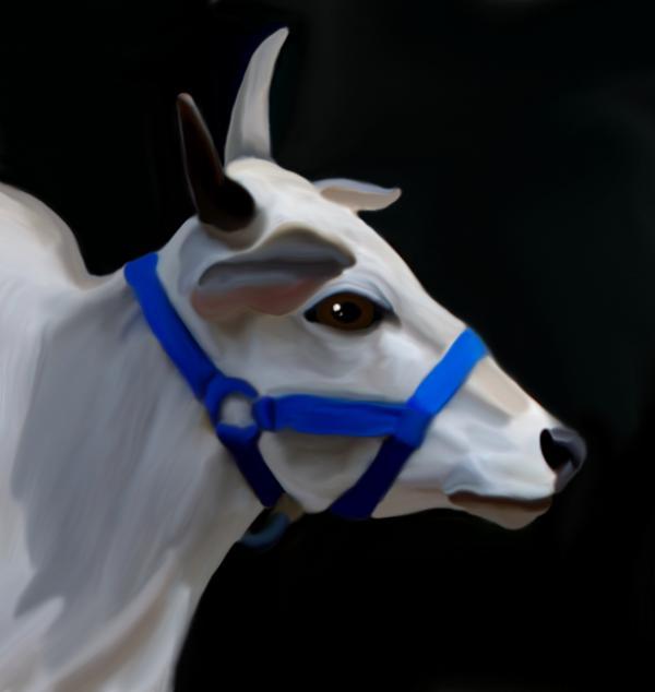 Brahma Bull Print by Karen Sheltrown
