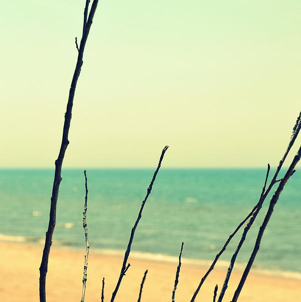 Branches On The Beach Print by Michelle Calkins