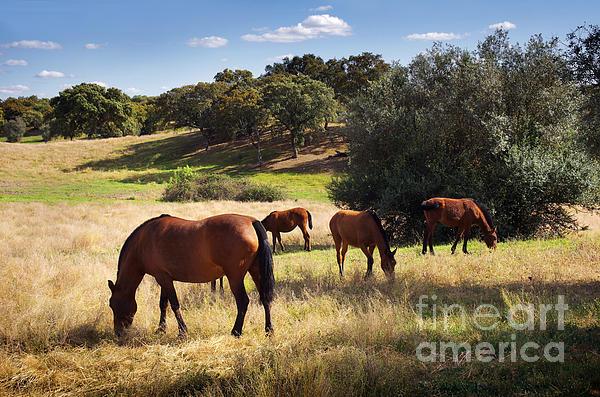 Breed Of Horses Print by Carlos Caetano