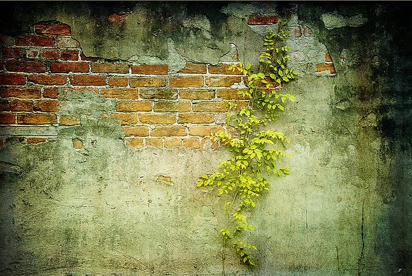 Brick Wall Print by Linda Olsen