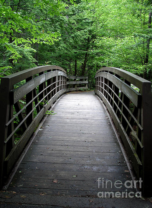 Kerri Mortenson - Bridge in the Woods