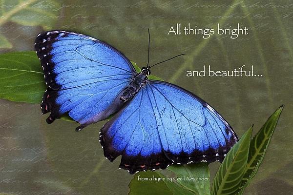 Bright And Beautiful  Print by Karen Stephenson