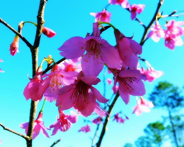 Carla Parris - Bright Blossoms