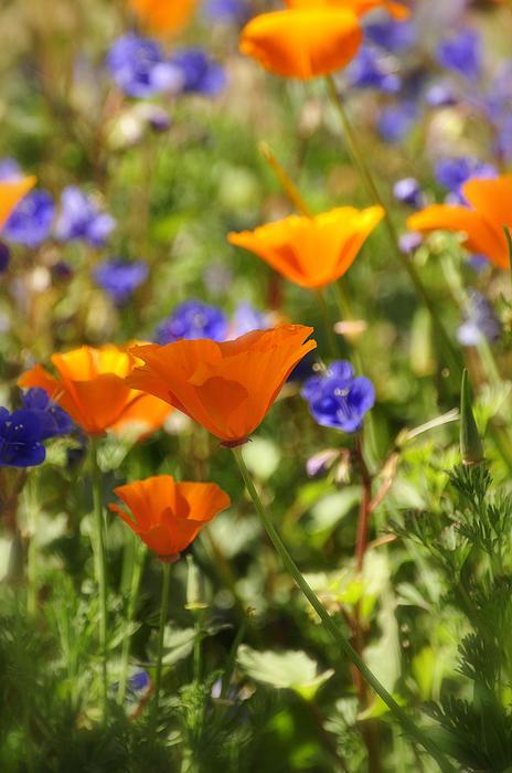 Saija  Lehtonen - Bring On the Wildflowers