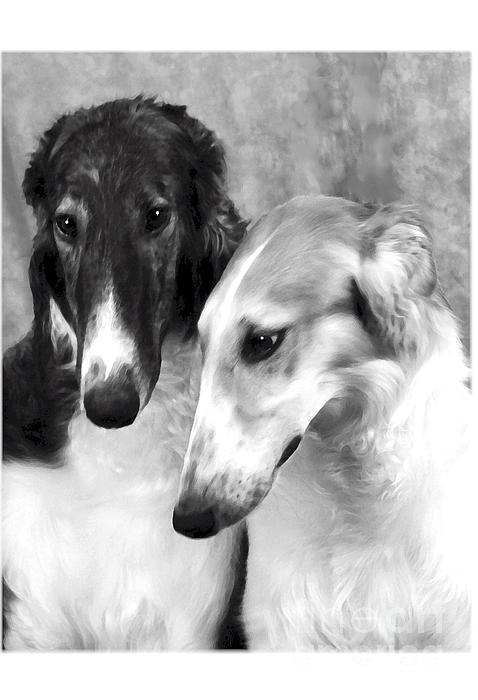 Brother And Sister Borzoi  Print by Maxine Bochnia