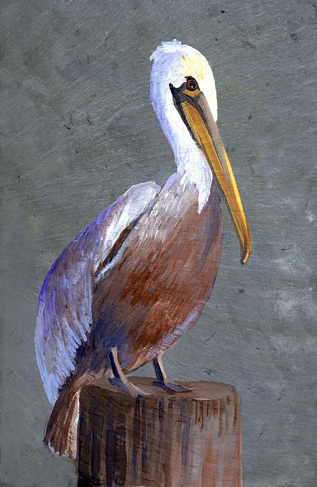 Brown Pelican Print by Elaine Hodges