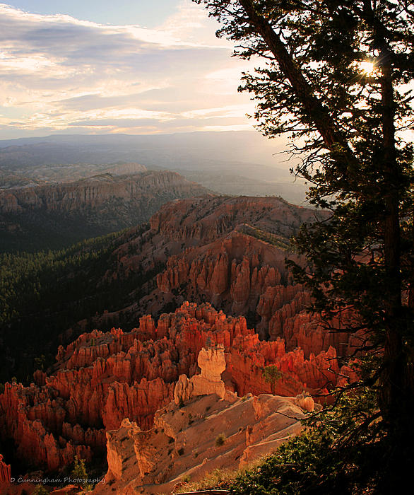 Dorothy Cunningham - Bryce Canyon Early Morning View