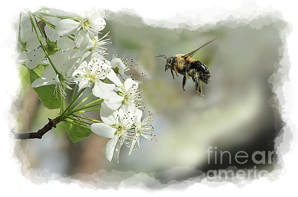 Bubble Bee Looking For Nectar Print by Dan Friend