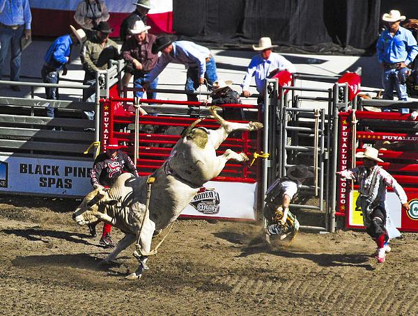 Bull Riding Print by Ron Roberts