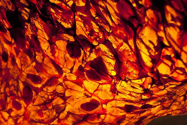 Jeremy Nicholas - Burning Passion