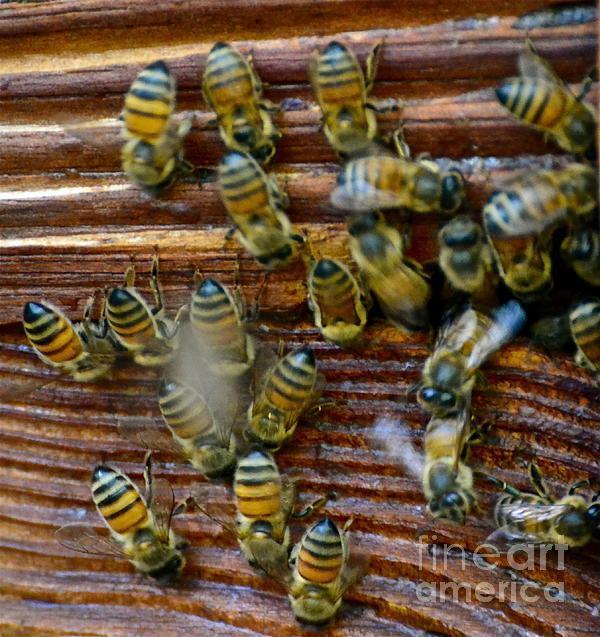 Sue McGlothlin - Busy bees